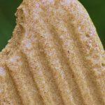 Popsicles (sucette glacée) au caramel de dattes